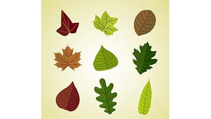9 color leaves design vector material